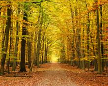 Autumn Forest Mural Wallpaper Part 86