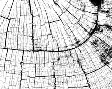 Black and White Inside Tree Bark Mural Wallpaper