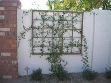 Wall Hanging Trellis