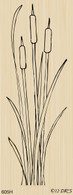 Long Tall Cattails - 605H