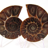 Ammonite Pair - FAMM136