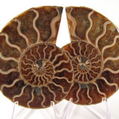 Ammonite Pair - FAMM137