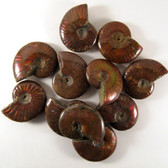Red Opalescent Flash Whole Ammonite, one (1) piece - FRedA016