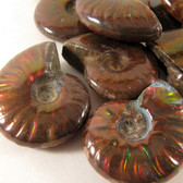 Red Opalescent Flash Whole Ammonite, one (1) piece - FRedA006