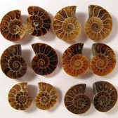 1.5 to 2 cm. Ammonite Pair 1 (One) pair - AAA