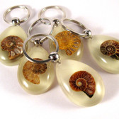 Ammonite Key Chain - Glow-in-the-dark - One (1) pc