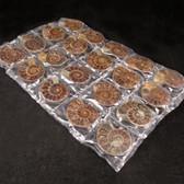 3 to 4cm Split Ammonites, 10 pairs
