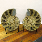 XXL Ammonite Pair, 21 inch, EAmm489