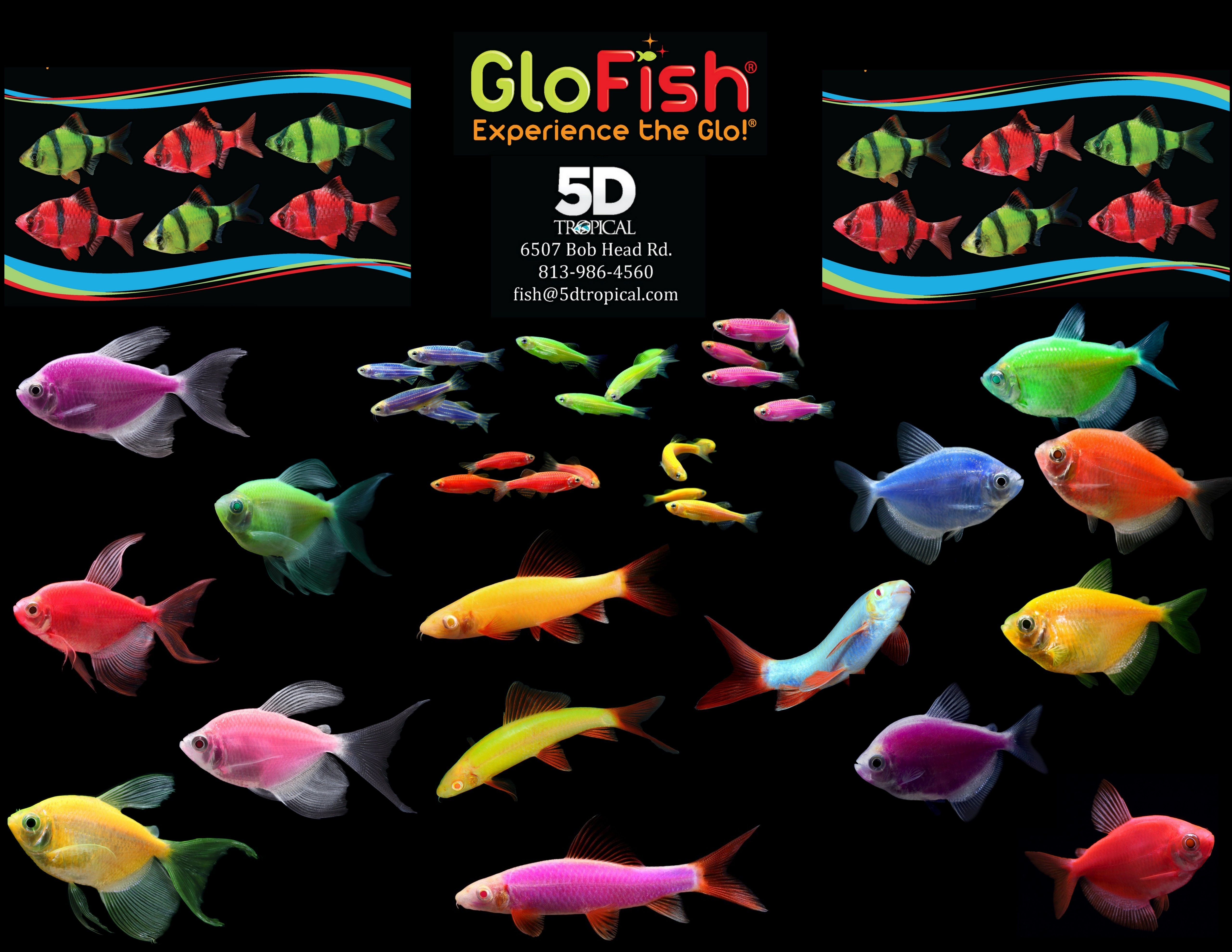 glofish-collage-with-lf-tetra-and-sharks.jpg