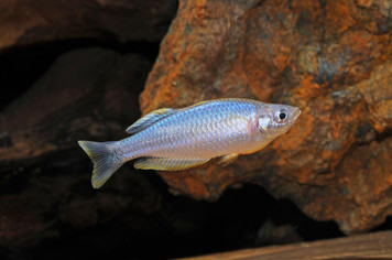 RAINBOW-PYGMAEA MD