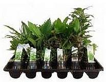 PLANT PACKAGE - PREMIUM
