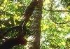 Rosewood essential oil  15 ml $33.95 Secrets of Eden