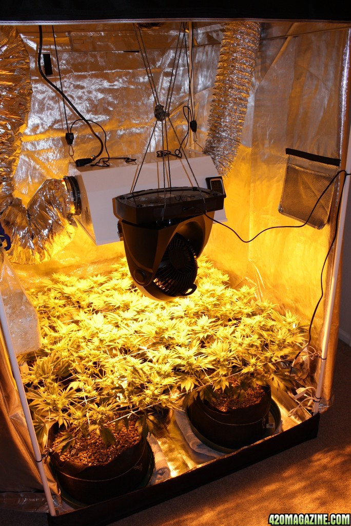 Making The Perfect Grow Room