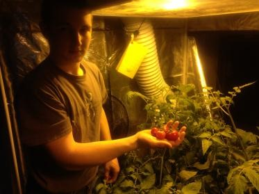 We show you some of the main reasons why you need to use a gorilla grow tent in your indoor gardening. & 8 Reasons Why Using Gorilla Grow Tents is a Great Idea - Perfect ...