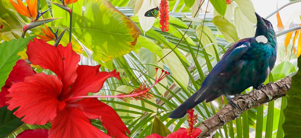 Birds of Paradise,tropical artwork,tui bird,indian ringneck,exotic art