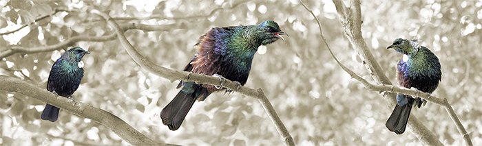 tui-trio-lucy-g-photography.jpg