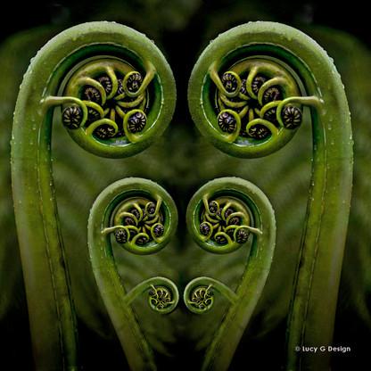 Fern frond glass wall art print for sale, featuring beautiful New Zealand fern fronds / korus.
