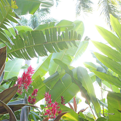 Tropical glass wall art print for sale, featuring lush green tropical banana palms and flowers.