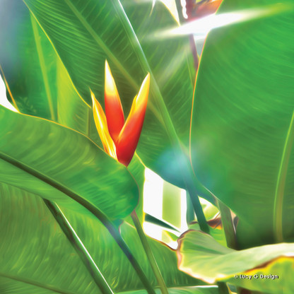 Birds of Paradise flower glass wall art print for sale, featuring a beautiful tropical birds of paradise flower.