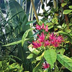 ''Secret garden'' botanical glass wall art