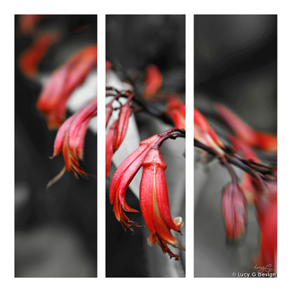 Flax Flowers glass wall art print for sale, featuring a photo of stunning red NZ flax flowers.