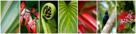 New Zealand flax, fern, Pohutukawa, NZ bird photo collage - nature photography print for sale.