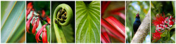 Signs of Summer', flax, fern, Pohutukawa, NZ bird photo collage - nature photography print for sale.