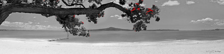Kohi in Summer', Rangitoto and Pohutukawa landscape photograph from Kohimarama, Auckland, NZ -print for sale.