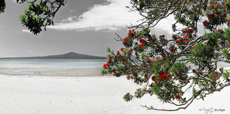 Rangitoto and Pohutukawa landscape photograph from Kohimarama, Auckland, NZ -print for sale.