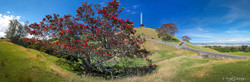 Cornwall Park Christmas', Pohutukawa trees and One Tree Hill, Auckland, New Zealand - landscape print for sale.