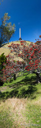 Cornwall Park Dreaming', Pohutukawa trees and One Tree Hill, Auckland, New Zealand - landscape print for sale.
