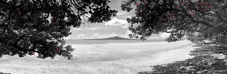 Takapuna Beach, Rangitoto and Pohutukawa beach scene, Auckland, NZ - landscape photo print for sale.