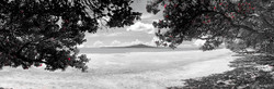 Takapuna in Summer (bw, panoramic to 1.8m)