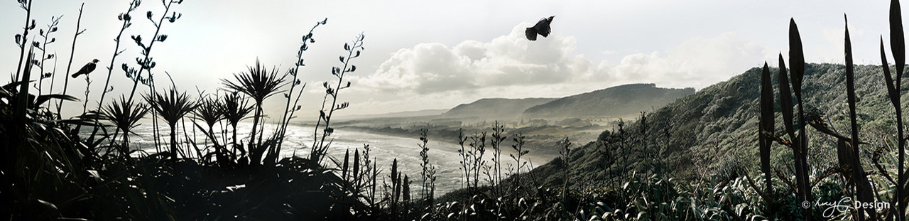 Flight of the tui 39 tui flying over flax at muriwai beach for Landscape design west auckland