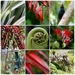 NZ Nature', photo print collage featuring New Zealand native Nikau, Flax, fern frond with Saddleback and Tui.