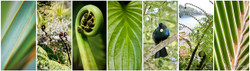 Lush 1', photo print collage for sale featuring Cabbage Tree, Tui, fern frond, Pohutukawa and boatsheds.