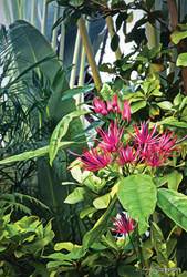 Secret Garden' botanical / flower with tropical foliage - photo art / canvas print for sale by Lucy G.