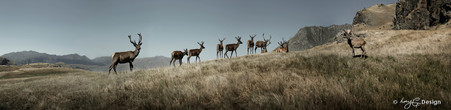 Deers on hill, Queenstown, New Zealand - panoramic landscape photo art print for sale