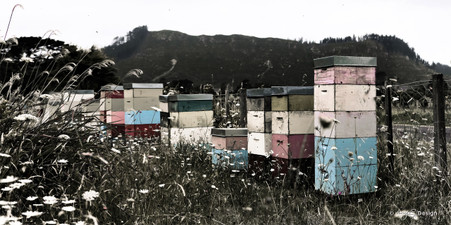 Beehives wall art print for sale, featuring rustic NZ bee hives photographed in the Coromandel.