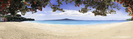 Cheltenham Beach, North Shore, Rangitoto and Pohutukawa,  Auckland,- landscape photo print for sale.