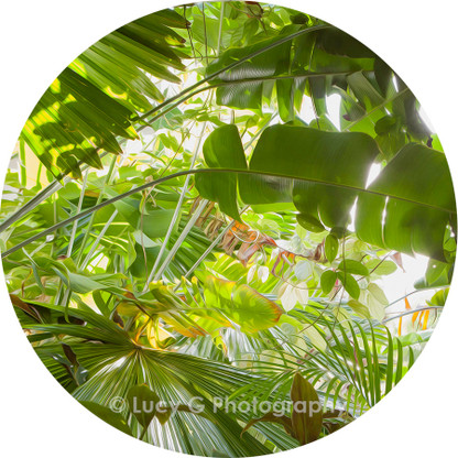 Round wall decal - 'Tropical Plants 6'