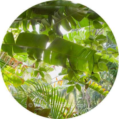 Round wall decal - 'Tropical Plants 4'