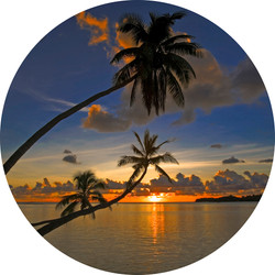 Round wall decal - 'Palms 2'