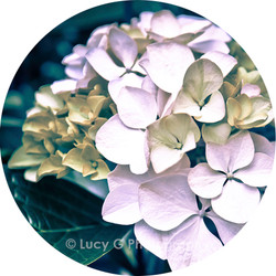 Round wall decal - 'Enchanted Garden 2'