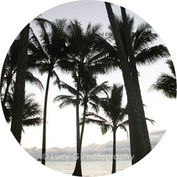 Round wall decal - ''Palms b/w''