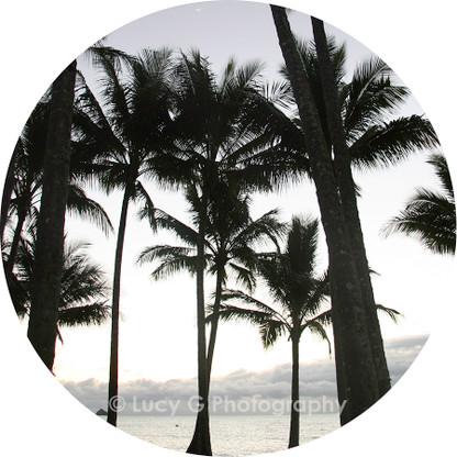 Round wall decal - ''Palms b/w''