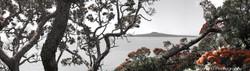 Pohutukawa Rangitoto beach scene, Ladies Bay,  St. Heliers, Auckland - photo wall art print for sale