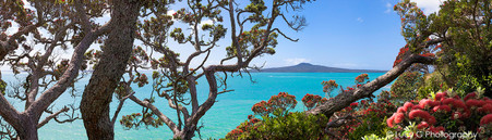Pohutukawa Rangitoto beach scene, Ladies Bay,  St. Heliers, Auckland - photo wall art print for sale