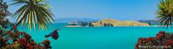 Brown's Island, Pohutukawa, flying Tui bird, cabbage trees and sea - photo wall art print for sale
