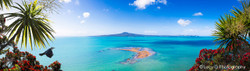 Rangitoto, Pohutukawa, flying Tui bird, cabbage trees and sea - photo wall art print for sale